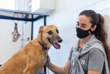 Puppis presenta su plataforma digital para encontrar la familia ideal a las mascotas rescatadas