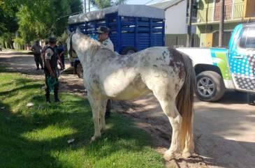 Venta ilegal y maltrato de animales